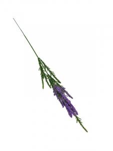 Wrzos kwiat pojedynczy 40 cm ciemno fioletowy