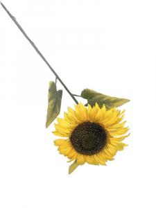 Słonecznik gigant kwiat pojedyczny 90 cm żółty