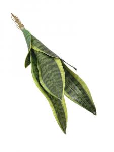 Sansewiera 49 cm zielona z żółtymi obrzeżami